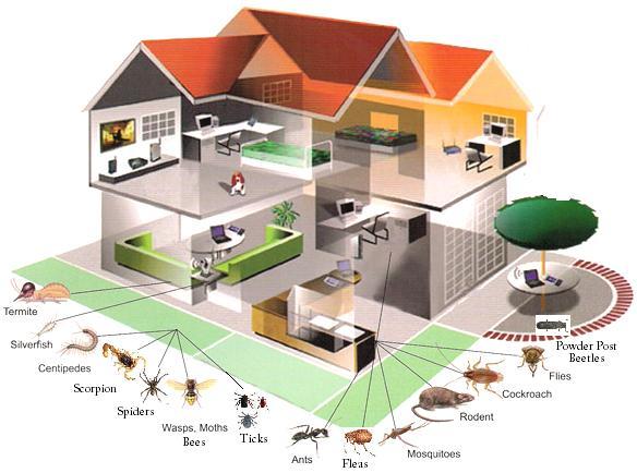 شركه مكافحه الحشرات بالرياض شركة الاوائل 0500091013 مكافحة-حشر�